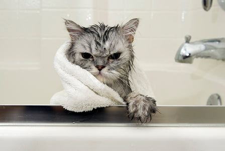 Tips on Bathing Your Cat
