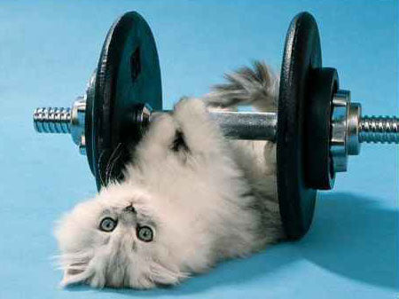 Cat Care(Exercise)