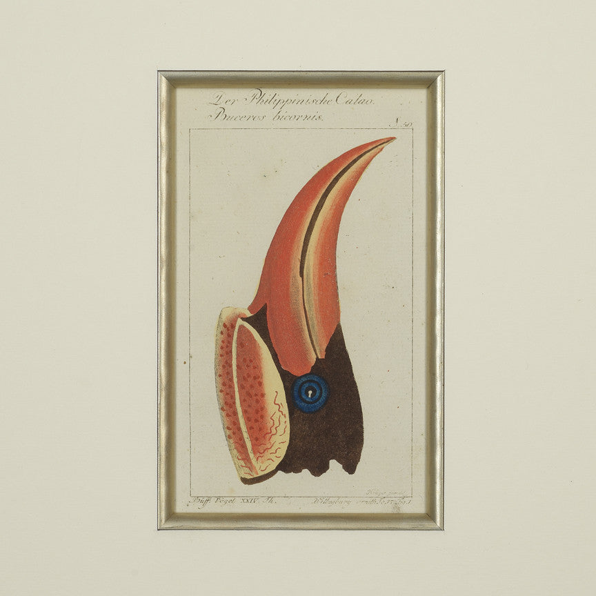 Set of 4 18th Century Ornithological Engravings by Buffon