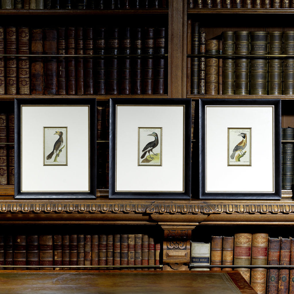 Set of 3 18th Century Ornithological Engravings by Buffon - Hobson May Collection - 1