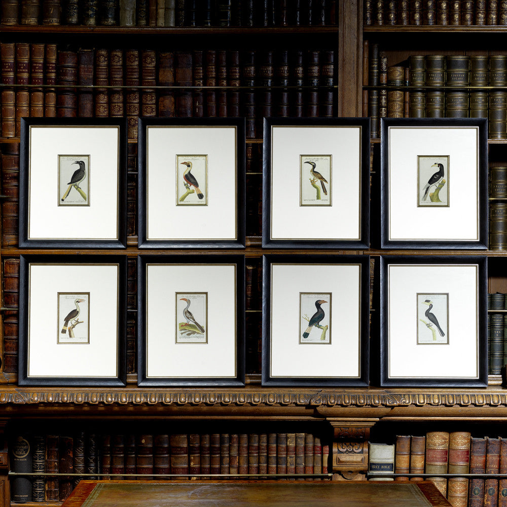 Set of 8 18th Century Ornithological Engravings by Buffon - Main View - 1