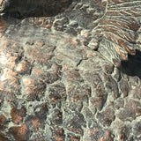 20th Century Cast Copper Alloy Swan - Wing Detail View - 7