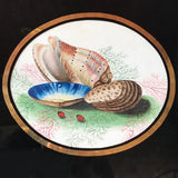 Early 19th Century Watercolour of Shells - Detail View - 2