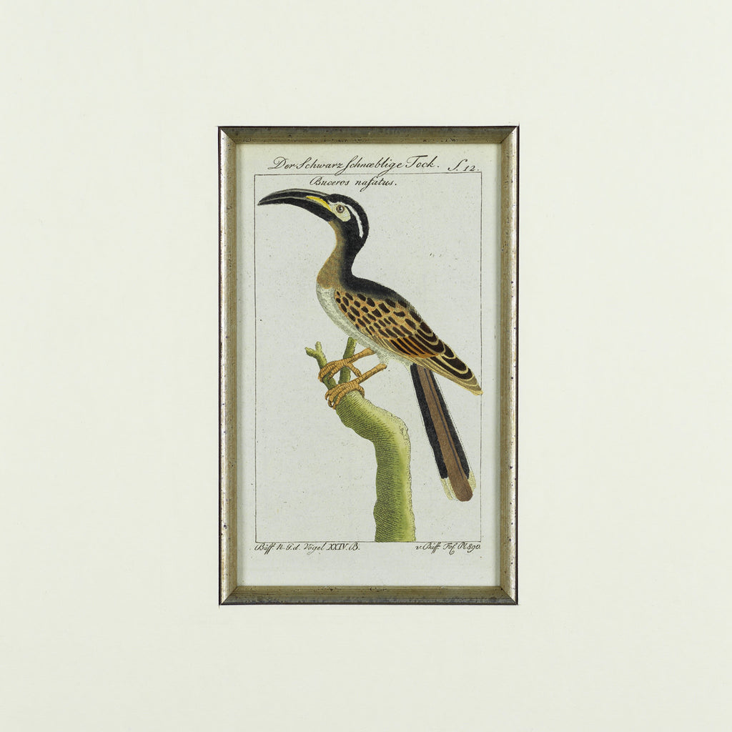 Set of 8 18th Century Ornithological Engravings by Buffon  - Detail View of Bird - 4
