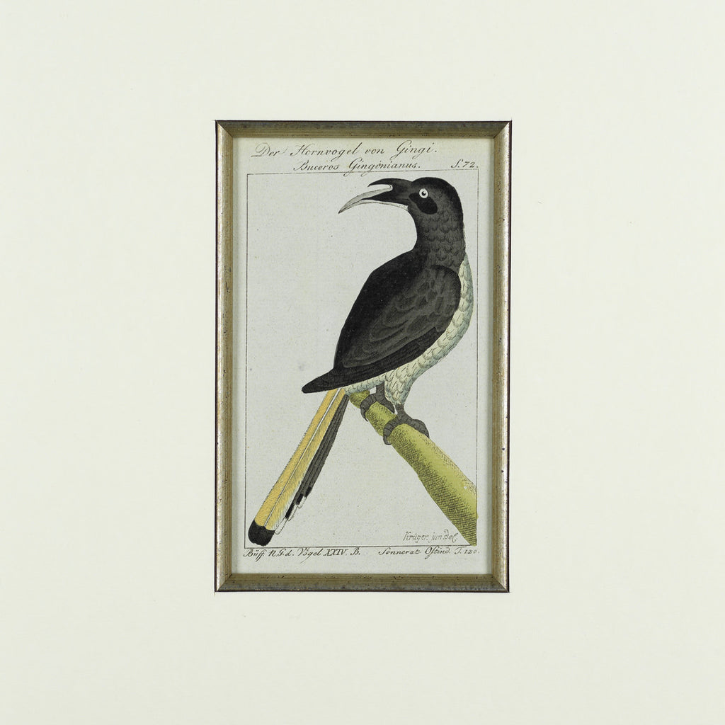 Set of 8 18th Century Ornithological Engravings by Buffon - Detail View of Bird - 2