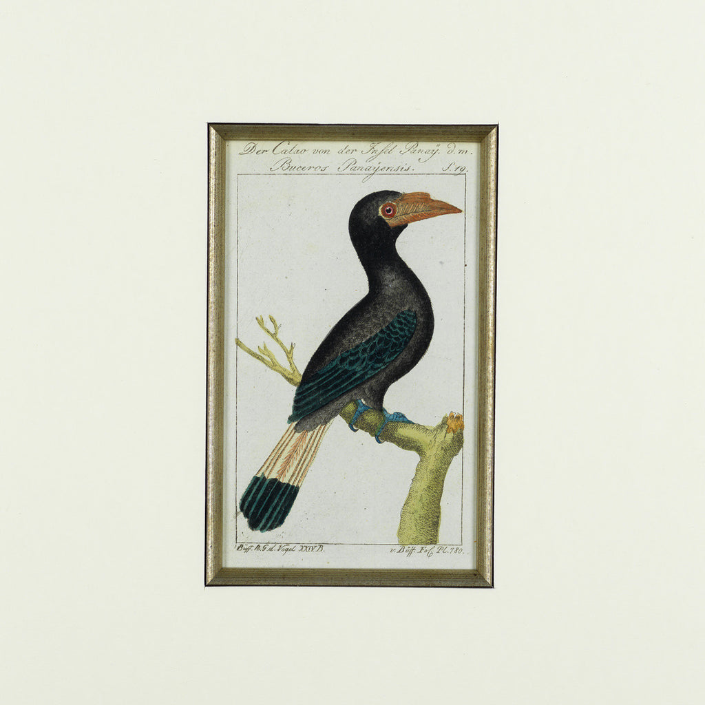 Set of 8 18th Century Ornithological Engravings by Buffon - Detail View of Bird- 8