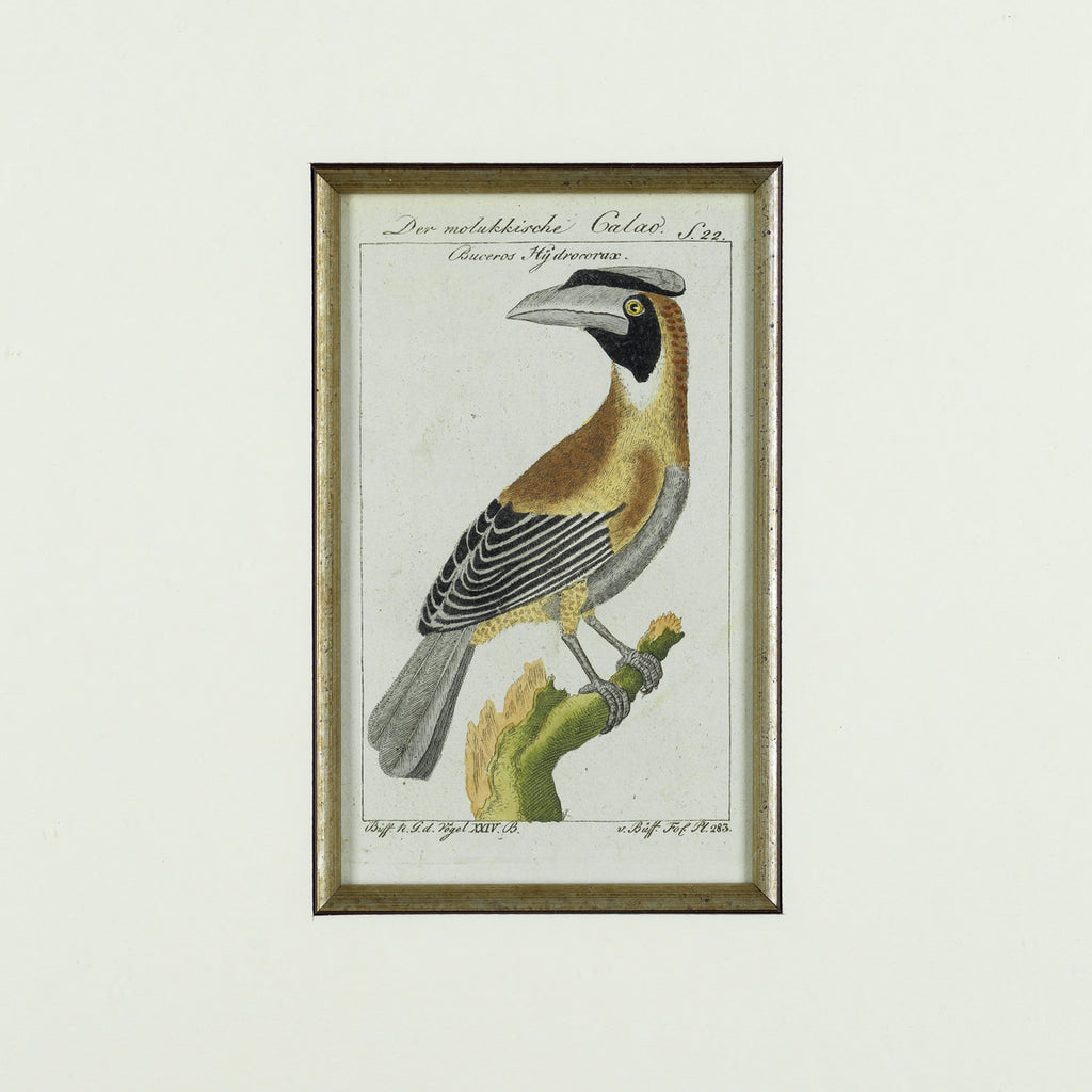 Set of 3 18th Century Ornithological Engravings by Buffon - Hobson May Collection - 3