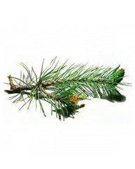 Uplifting Pine Needle & Eucalyptus Christmas Candle - Pure Light Botanics - 5