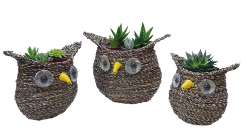 Owl Planter 20/case