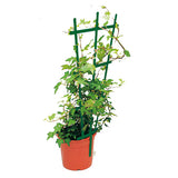 Clip on Trellis Green 50/pk