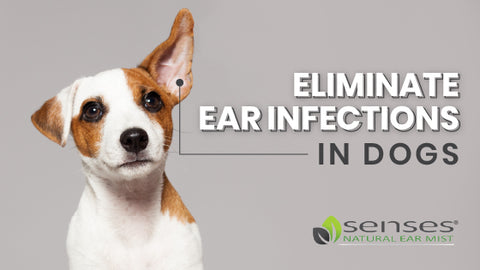 Eliminate Ear Infections in Dogs