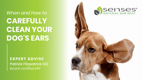 When and How to Carefully Clean Your Dog's Ears
