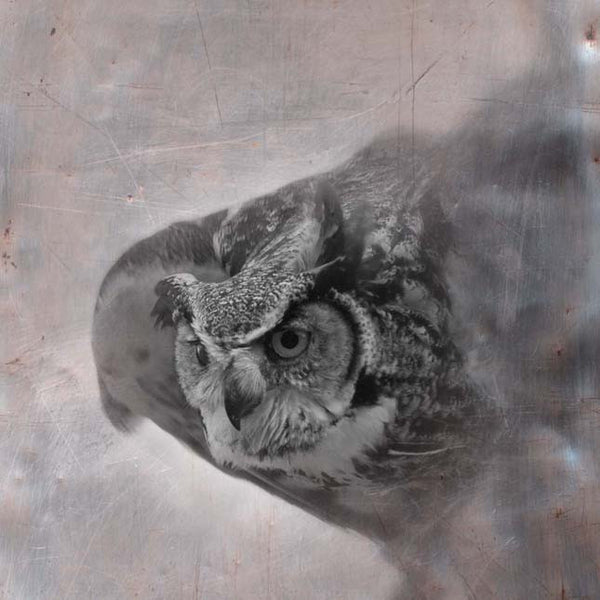 Heather Johnston Photography - Owl Series - Parliament Interiors