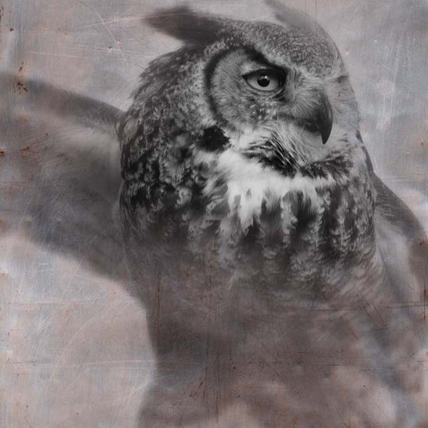 Heather Johnston Photography - Owl Series