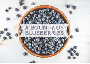 A Bounty of Blueberries