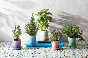 Le Creuset Ceramic Herb Planter