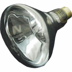 Pac Fab Bulb 12V 100W 614501 Home & Garden > Lighting > Light Bulbs Pentair