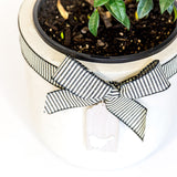 Potted living wreath, star jasmine, Beautiful fresh flowers, quality goods and gifts. Free delivery within Auckland and North Shore. Birthday, anniversary, congratulations, new baby, new home, hospital, sympathy, corporate, client gifts, love, living plant.