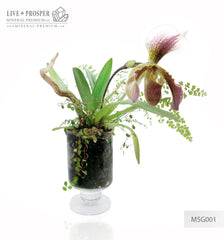 Paphiopedilum and plant mix with driftwood and obelisk of rock crystal in a Floriana