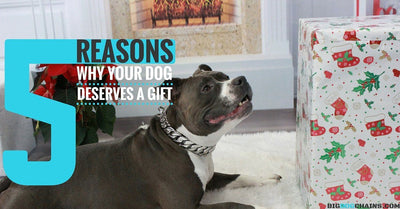 5 Reasons Why Your Dog Deserves a Gift | BIG DOG CHAINS