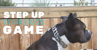 How to Step Up Your Dog's Game with a Collar | BIG DOG CHAINS