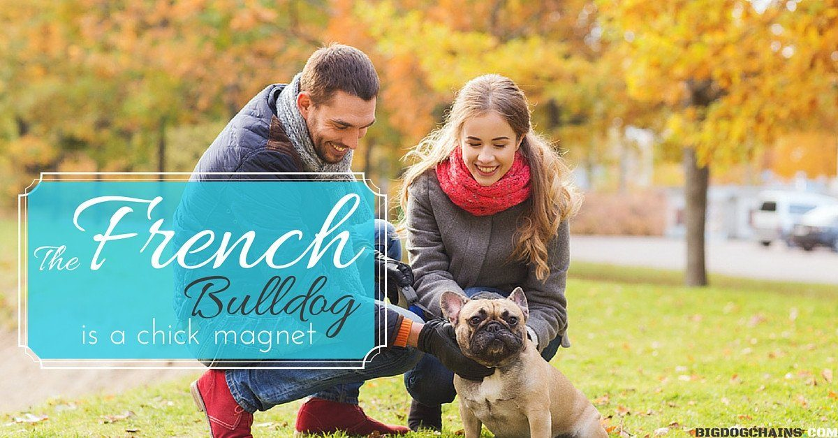 The French Bulldog Is A Real Chick Magnet Big Dog Chains Big Dog Chains