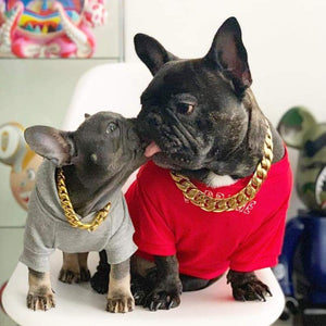 Small Gold Dog Collars Luxury Stainless Steel and Gold Finish Jewlery Collars for Frenchie French Bulldog and more - BIG DOG CHAINS