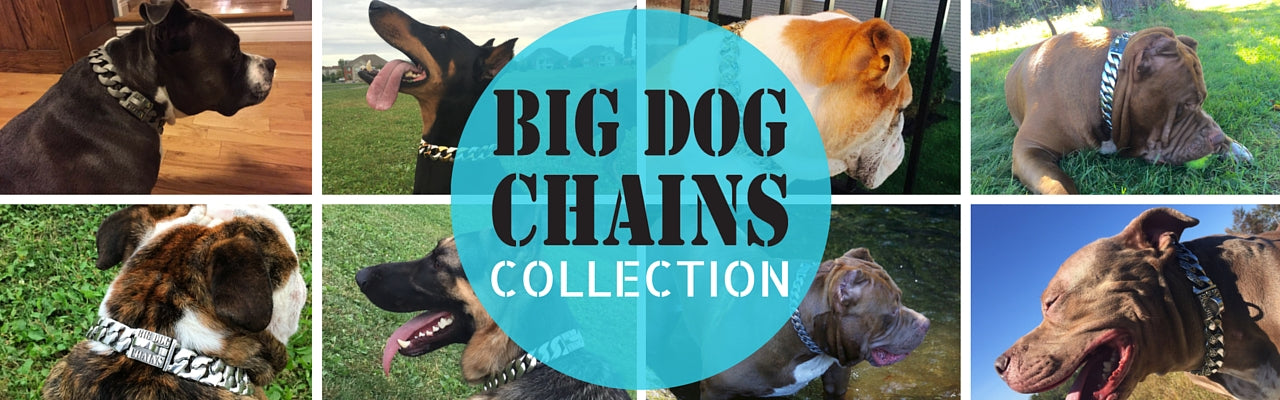 BIG DOG CHAINS DOG COLLARS stainless steel gold dog collar online store pet shop collar pitbull large dog collars bully collars rottweiler doberman dog collar Bull Mastiff quality collar bulldog bully large DOG COLLAR