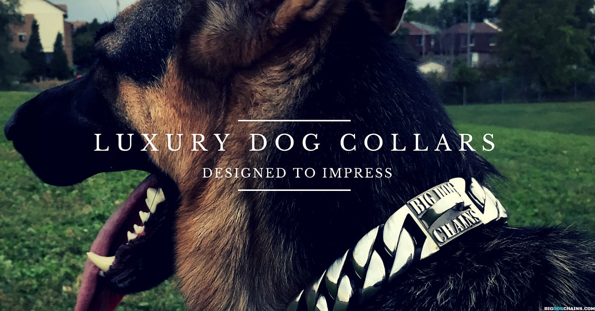 Caesar XL Large Designer Dog Collar - BIG DOG CHAINS