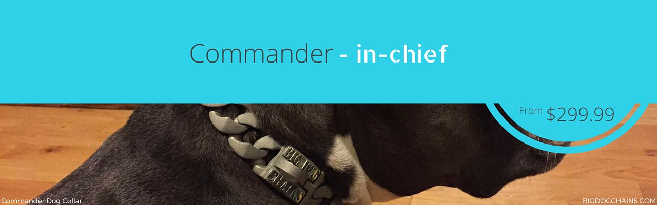Commander Dog Collar - BIG DOG CHAINS