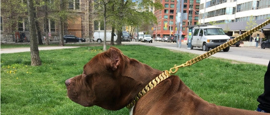 Cuban Link Gold Leash Strong Metal Lead for Large Dogs like Pit bull Bully XL - BIG DOG CHAINS