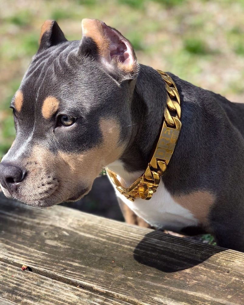 Custom Gold Cuban Link Dog Collar for Large XL Bully Personalized Luxury Chain Collar Strong and Unbreakable Stainless Steel - BIG DOG CHAINS