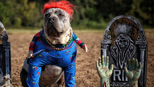 Funny_Halloween_Dog_Costume_Gold_Dog_Collar_Luxury_Dog_Collar_for_Large_Dogs_Like_Pit_Bulls_XL_Bully_Bull_Mastiff_Cane_Corso_Presa_Canario_BIG_DOG_CHAINS