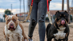 KILO_Gold_Dog_Collar_For_XL_Dogs_Cuban_Link_Stainless_Steel_and_Gold_Super_Strong_Chain_Collar_Perfect_for_Large_Dog_Breeds_Pit_Bulls_Rottweilers_Bull_Mastiff_Bull_Dog_and_More_BIG_DOG_CHAINS