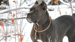 Large_Custom_Training_Collars_Choker_Chains_Super_Strong_Gold_and_Stainless_Steel_for_Strong_Dogs_Like_XL_Bully_Pit_Bull_and_more_BIG_DOG_CHAINS