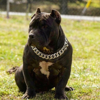 Lone Star Matte Finish Dog Collar for Strong Dogs Like Pit bull Doberman Bull Mastiff XL bully Rottweiler Cane Corso Cuban Link Tough Dog Chain Collar - BIG DOG CHAINS