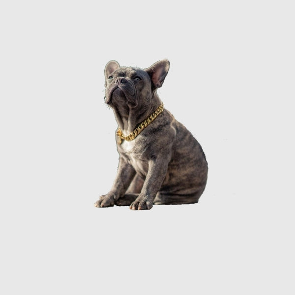 Small_Unique_Dog_Collars_French_bulldog_Silouette_BIG_DOG_CHAINS