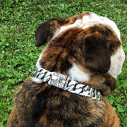 Magnum | english bulldog Dog Collar CHAINS | BIG DOG CHAINS - 2