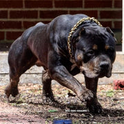 CHECKO_Gold_Pit_Bull_Training_Choker_Collar_BIG_DOG_CHAINS