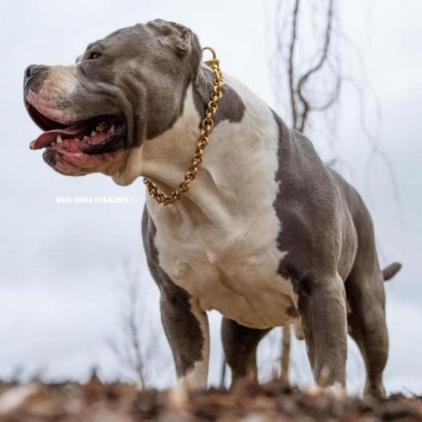 CHECKO_Unique_Choker_Collar_for_Large_and_Strong_Dogs_Like_Pit_Bulls_XL_Bully_and_More_BIG_DOG_CHAINS