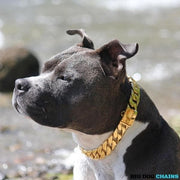 Cuban_Gold_Dog_Collar_Cuban_Link_Designed_For_Medium_Size_Dog_Breed_with_a_Very_Strong_and_Patented_Clasp_Design_for_Medium_Pit_Bull_Bully_Pitbull_XL_BULLY_and_more_BIG_DOG CHAINS