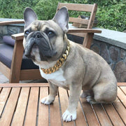 Frenchies bully | Cuban gold dog collar | Big Dog Chains