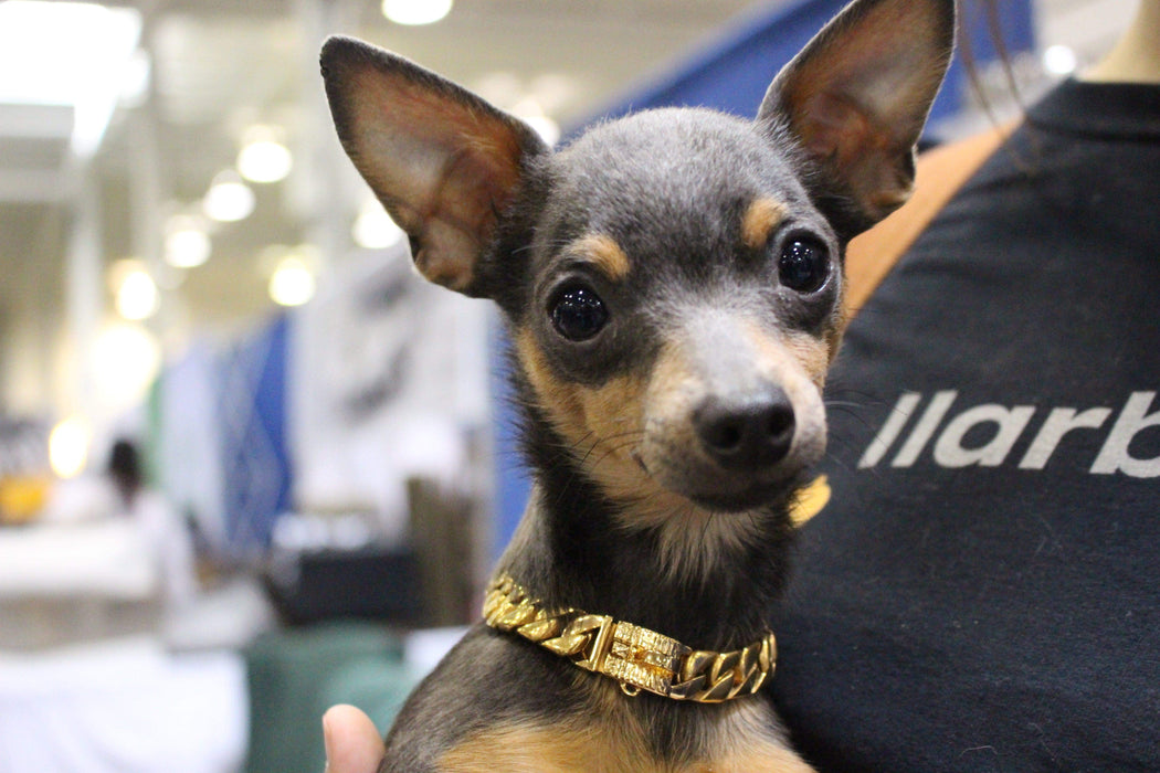 Luxury cuban link Gold dog collar | Chihuahua Dog | Lil'Dog Chains