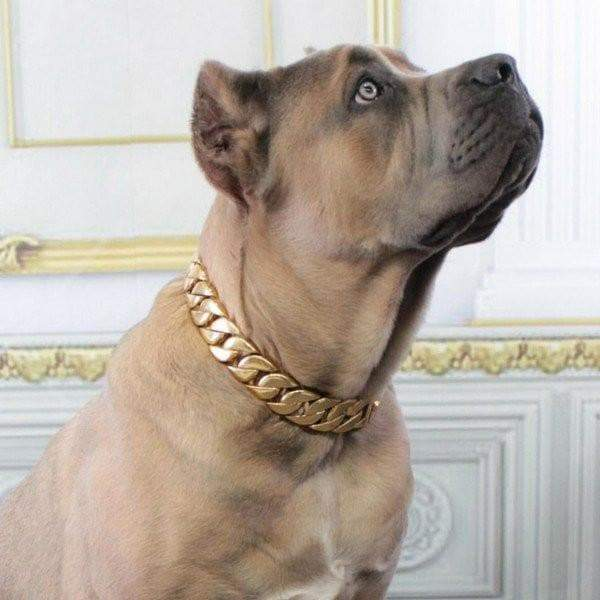 KILO gold dog collar custom gold cuban link stainless steel luxury designer dog collar large - BIG DOG CHAINS - 13