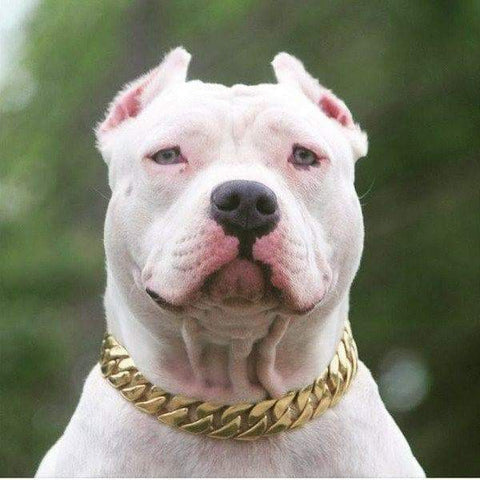 KILO gold dog collar custom gold cuban link stainless steel luxury designer dog collar large - BIG DOG CHAINS - 9