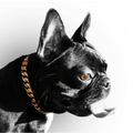 Miami Gold Dog Collar for small dogs stainless steel custom gold dog collars - LIL DOG CHAINS - 2