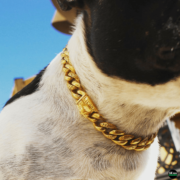 GOLD DOG COLLAR FOR FRENCHIES DOG | LIL' DOG CHAINS