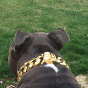 Rico gold dog collar jewelry - BIG DOG CHAINS - 5