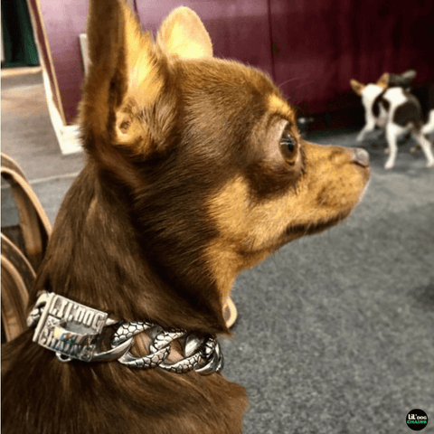 Stone Small Dog Collar Custom Made Stainless Steel for small dogs - BIG DOG CHAINS