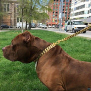 Dog wearing gold Collar and leash from Big Dog Chains